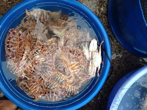 Chợ cá Bến Do - Nhịp sống bình dị giữa biển khơi