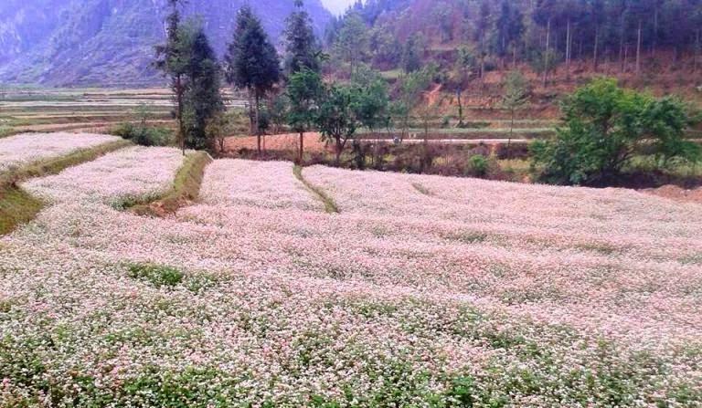 Những điểm ngắm hoa tam giác mạch ở Hà Giang