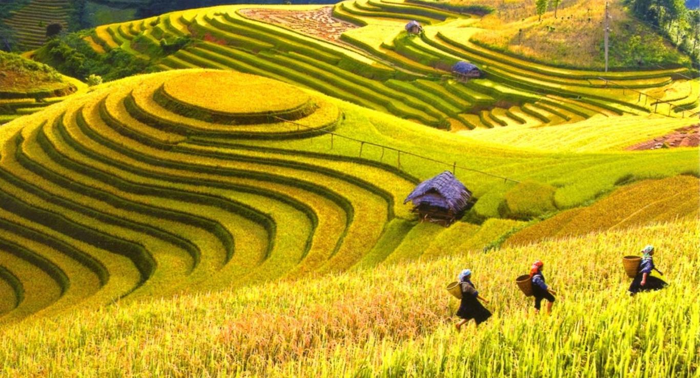 Mùa lúa chín ở Hà Giang làm nao lòng du khách
