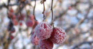 Mùa đông ở Sapa đẹp như thế nào?