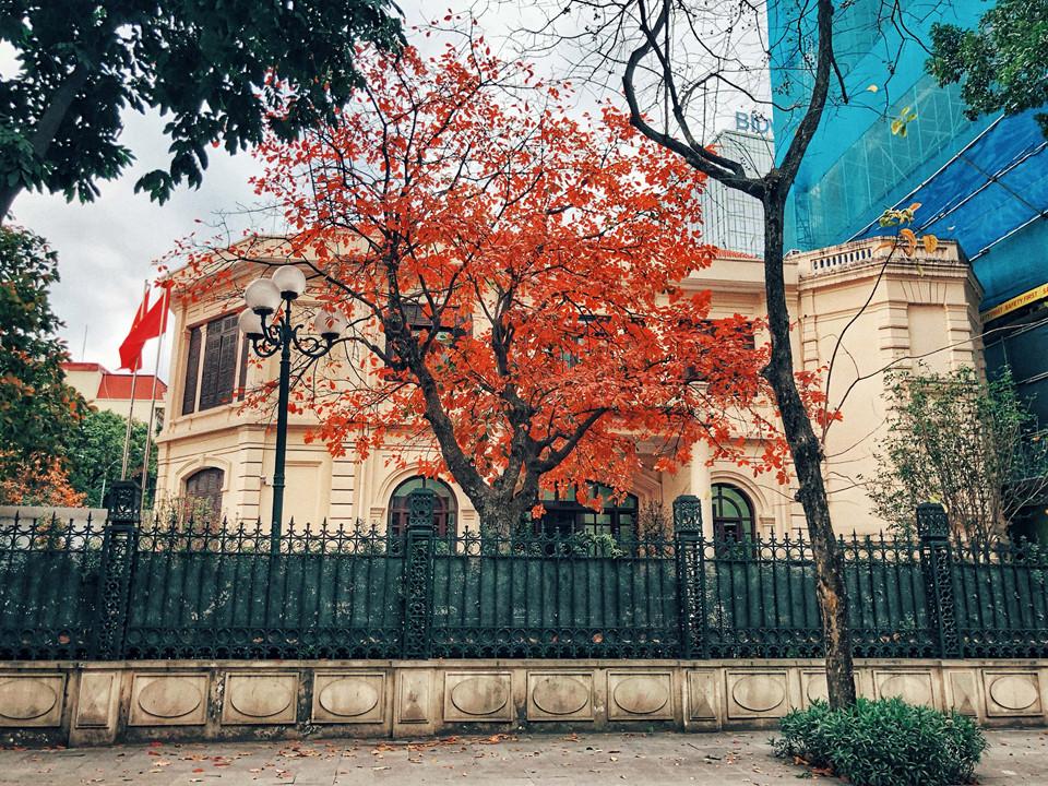 Hà Nội tháng hai mang một màu đỏ đẹp tựa mùa thu trời Âu