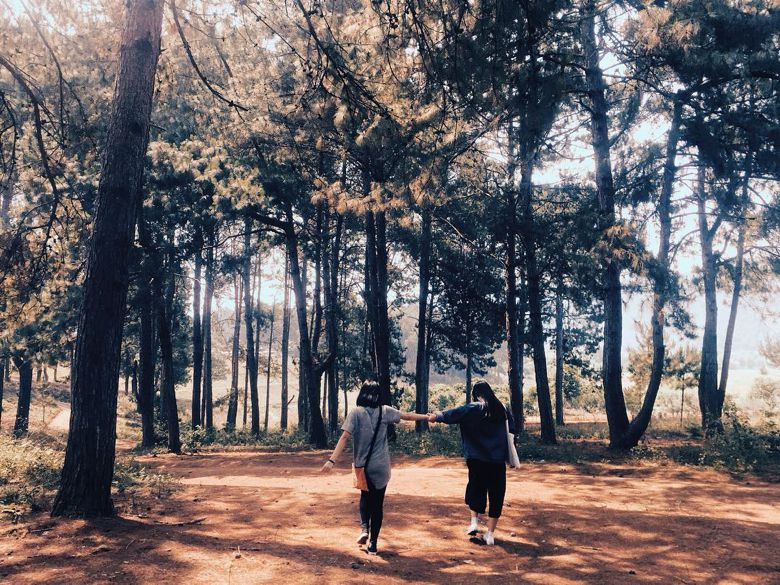 Khám phá rừng thông bản Áng đẹp như trong mơ