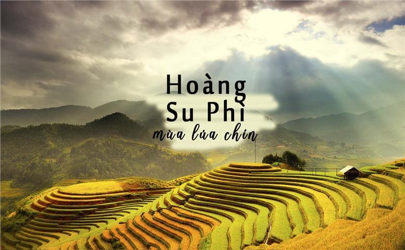 Trải nghiệm dịch vụ cho thuê xe 16 chỗ đi Hoàng Su Phì tại Ngọc Minh